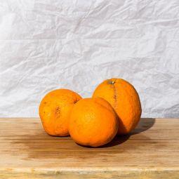 Oranges non traités 1pc