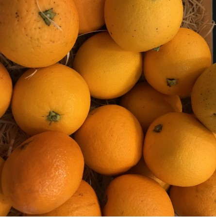 Oranges de table BIO - 1pc ±280g