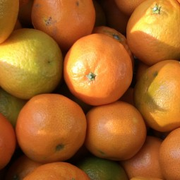 Clementines calabrese bio 1kg