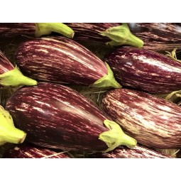 Aubergine graffiti BIO - 1pc ±250g