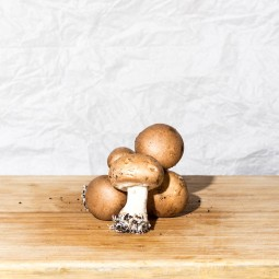 Champignons blonds 200g