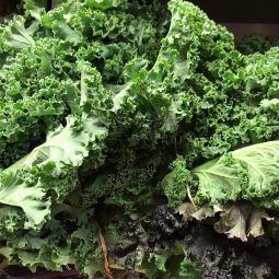 Chou Kale bio en botte 1pc