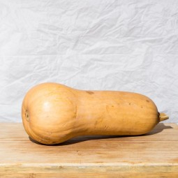 Butternut 1pc