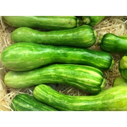 Courgette violon - 1pc ±500g