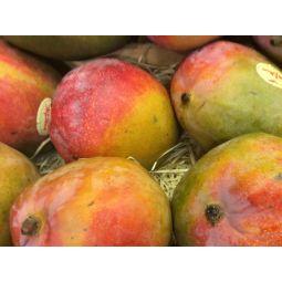 Mangue kent Brésil - 1pc ±800g