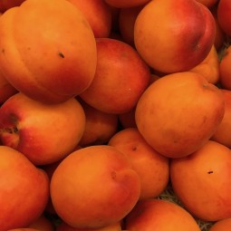 Abricots Pricia bio 500g