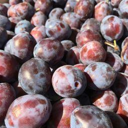 Quetsche (Prunes de Damas) 500g