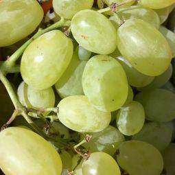 Raisins Victoria 500g