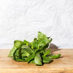 Basilic frais en botte 1pc