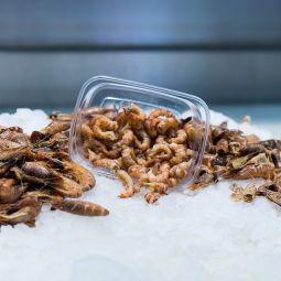 Crevettes de Zeebruges épluchées à la main par 100g