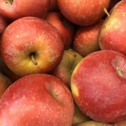 Pommes royal gala bio - 1pc ±180g