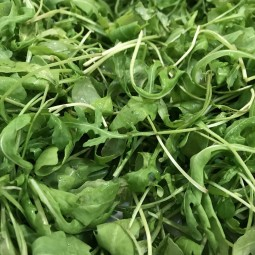 Roquette sauvage 100g