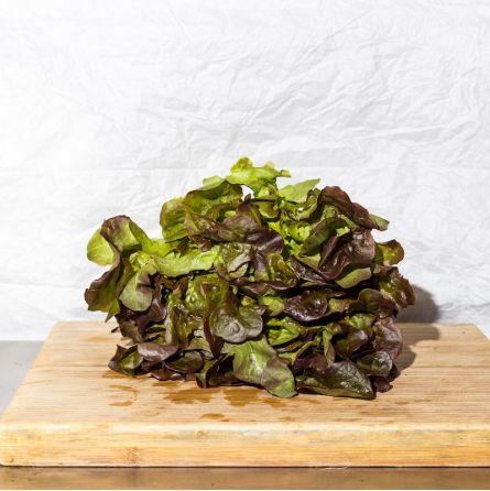 Salade Feuilles De Chêne ou Rougette BIO  1pc