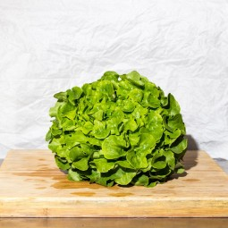 Salade Feuilles De Chêne verte BIO 1pc