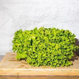 Salade Batavia Verte BIO  1pc