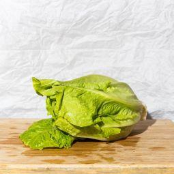 Salade Romaine BIO  1pc