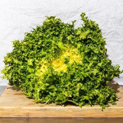Salade frisée grosse bio 1pc