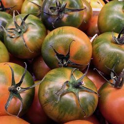 Tomates Camone 500g